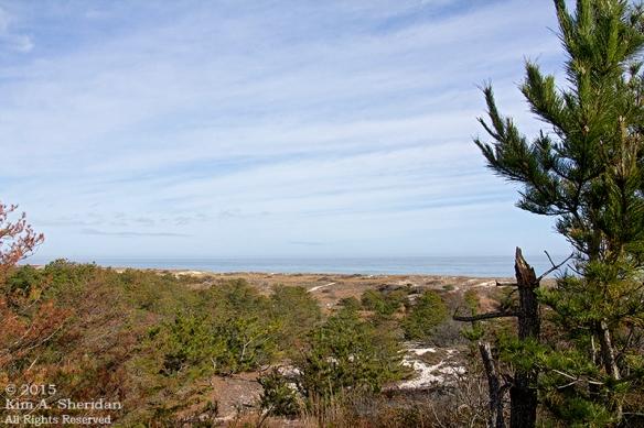 151127_DE Cape Henlopen State Park_7101acs