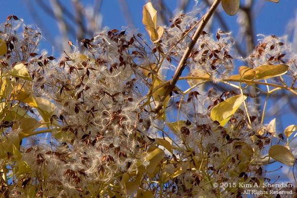 151206_PA HNWR Seeds_7941acs