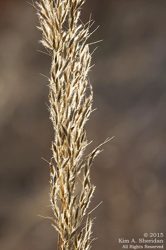 151206_PA HNWR Seeds_7990acs