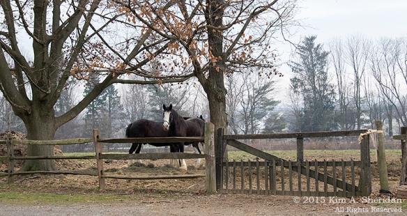 151212_PA Landis Valley Animals_3415acs