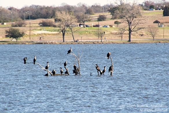 151223_TX White Rock Lake_4127acs