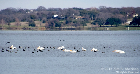 151229_TX White Rock Lake_5016acs