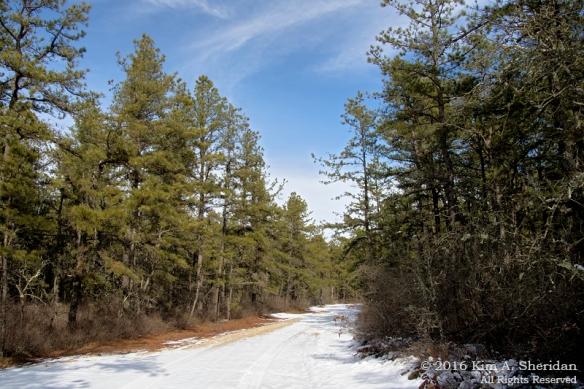 160206_NJ Pines Penn Forest Snow_9672acs