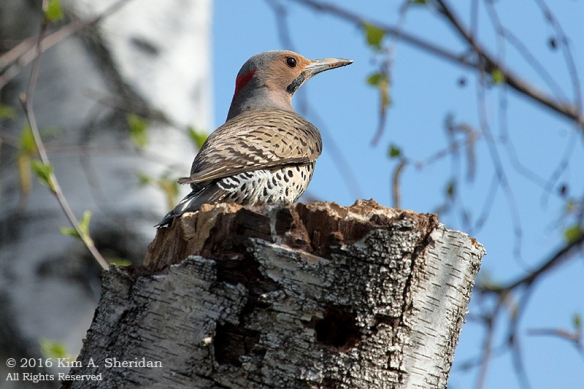 160421_PA Home Flicker Nest Excavation_6183acs