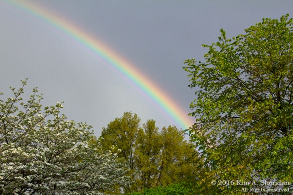160426_PA Home Rainbow_8476ac