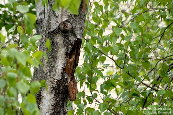 160510_PA Home Flicker Nest_7456acs