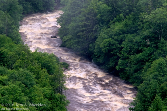 160705_WV Blackwater Pendleton Point_2968acs