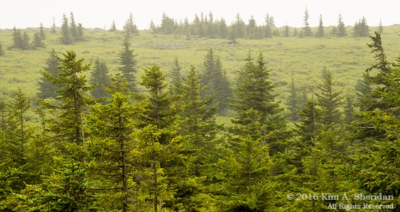 160705_WV Dolly Sods_3403acs
