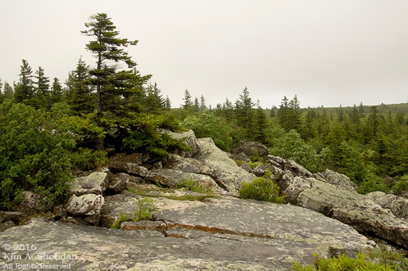 160705_WV Dolly Sods_3410acs