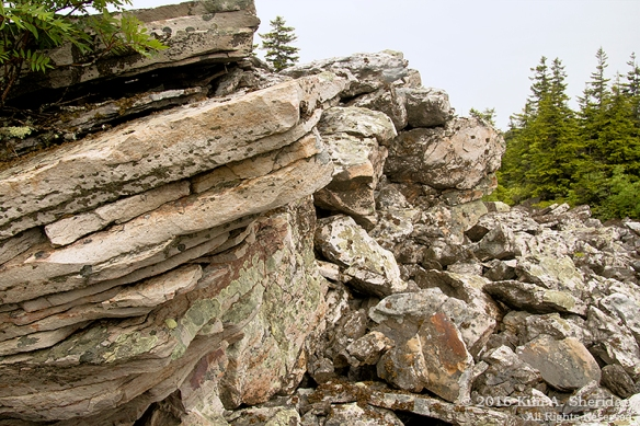 160705_WV Dolly Sods_3435acs