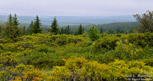 160705_WV Dolly Sods_3502acs