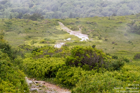 160705_WV Dolly Sods_3552acs