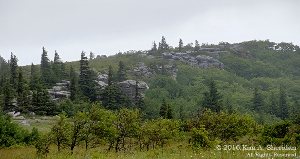 160705_WV Dolly Sods_3573acs