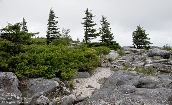 160705_WV Dolly Sods_3590acs