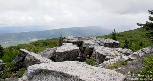 160705_WV Dolly Sods_3614acs
