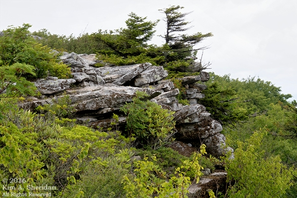 160705_WV Dolly Sods_3634a