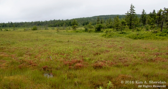 160705_WV Dolly Sods_3708acs