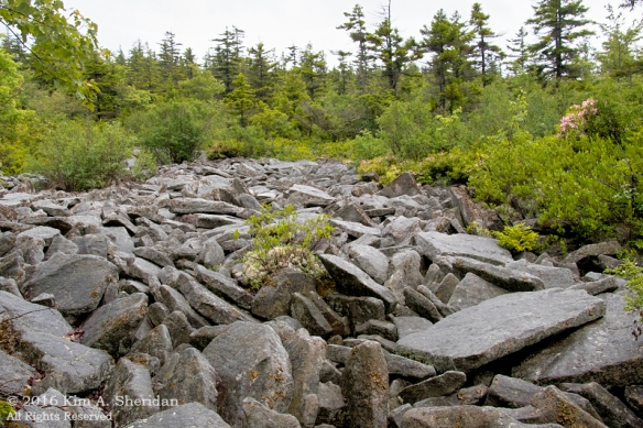 160705_WV Dolly Sods_3738acs