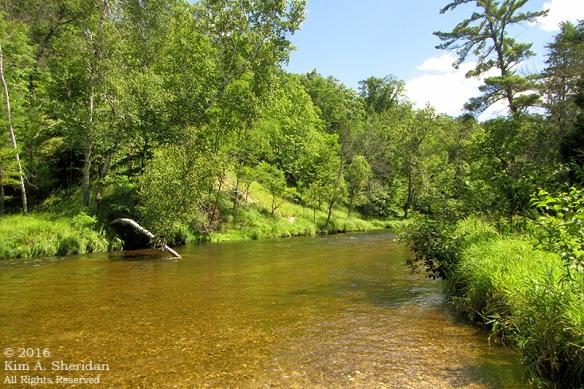 160726_mi-pere-marquette-river-canoe_4102acs
