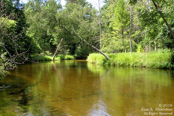 160726_mi-pere-marquette-river-canoe_4116acs