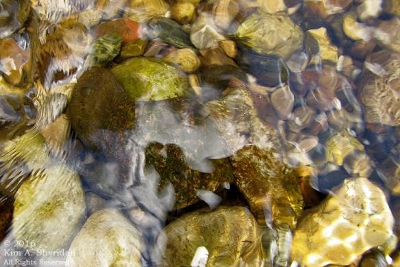 160726_mi-pere-marquette-river-canoe_4121acs