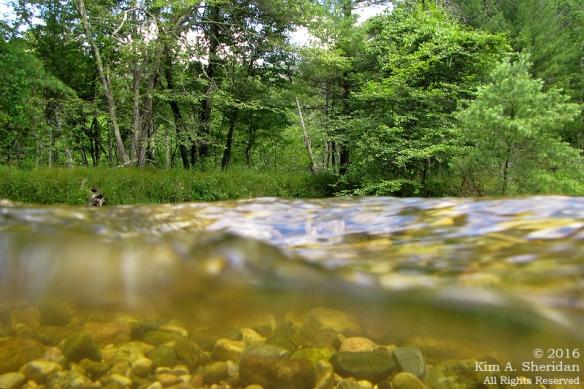 160726_mi-pere-marquette-river-canoe_4126acs
