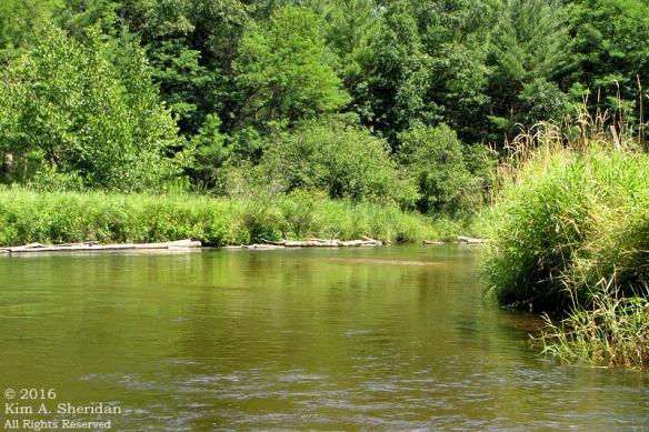 160726_mi-pere-marquette-river-canoe_4148acs