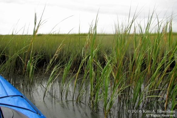 160921_nj-oc-devils-island-kayak_4445acs