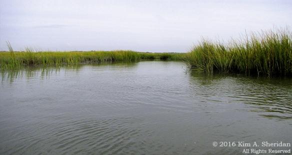 160921_nj-oc-devils-island-kayak_4447acs