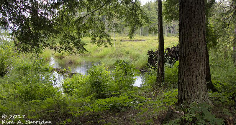 Adirondacks Carefree: An Adirondack Farewell   The Wild Edge